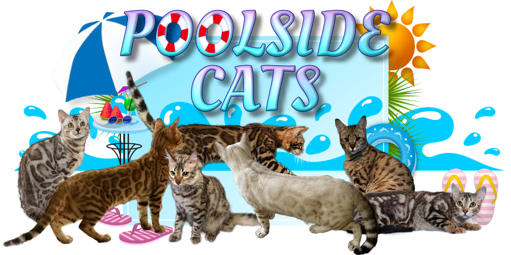 PoolsideCats