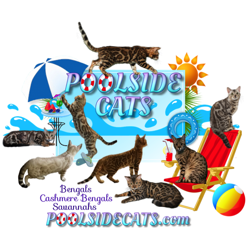 PoolsideCats